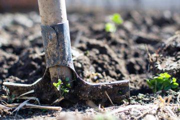 Planting & Landscape Removal